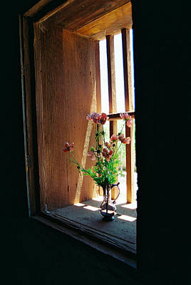 Flower In Window Poster