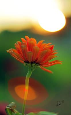 Flower Light Poster