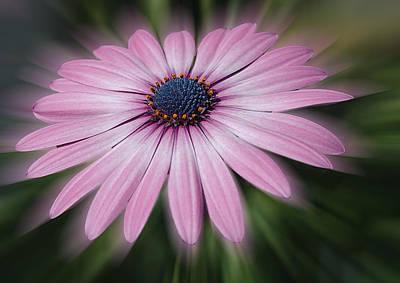 Flower Zoom Poster