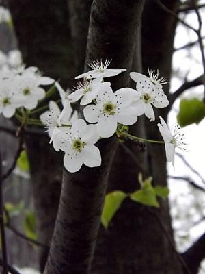 Flowering Tree 4 Poster by Gerald Strine