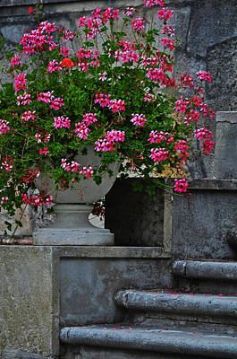 Flowers On The Steps Poster