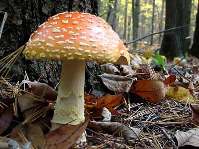 Fly Mushroom Poster