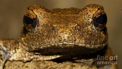 Foam Nesting Frog Poster