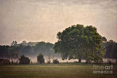 Poster featuring the photograph Foggy Country Morning by Cheryl Davis