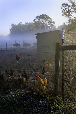 Foggy Florida Farm Morning Poster