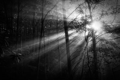 Foggy Forest Poster by Matt  Trimble