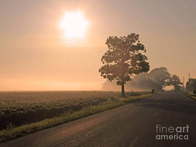 Foggy Sunrise On Soybean Field Poster