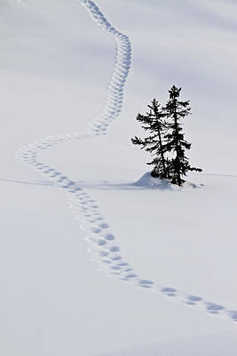 Footstep Trail On Snow Poster by Gerhard Fitzthum