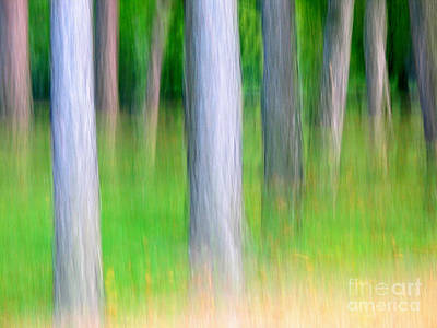 Forest Abstract Poster by Odon Czintos