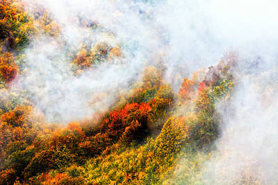 Forest In Veil Of Mists Poster by Evgeni Dinev