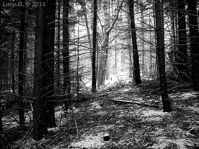 Poster featuring the photograph Forest by Lucy D