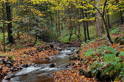 Forest Stream In Autumn Poster by Stephen  Vecchiotti
