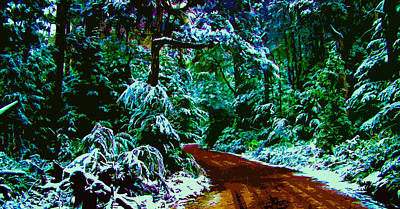 Forest Trail In The Winter Poster