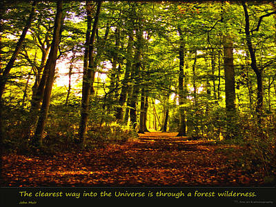 Forest Wilderness Poster