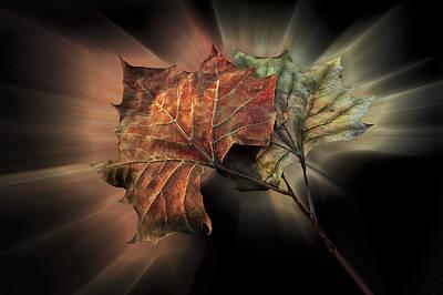 Forever Autumn Poster