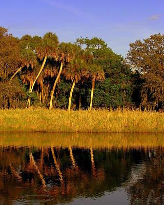 Four Palms Reflecting In Myakka Lake Poster