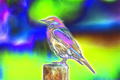 Fractal - Colorful - Western Bluebird Poster