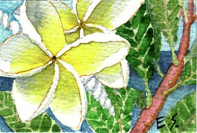 Fragrant Plumeria Poster