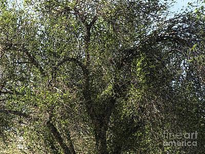 Fresco Tree Poster