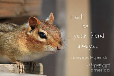 Friend For Peanuts Poster by Cathy  Beharriell