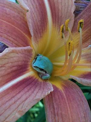 Poster featuring the photograph Frog In The Day Lilly by Jeremiah Colley