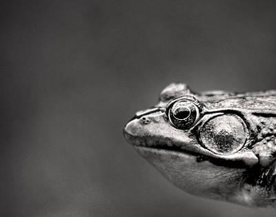 Frog Portrait Poster