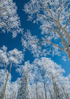 Frost Covered Trees On A Cold, Winter Day Poster
