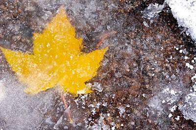 Poster featuring the photograph Frozen Leaf by Scott Holmes