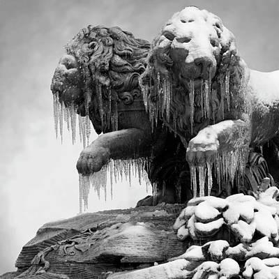 Frozen Lions Poster