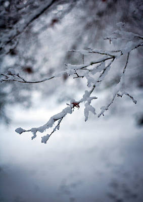 Frozen Path Poster