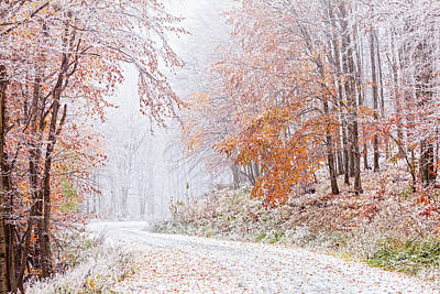 Frozen Road In Frosted Forest Poster by Evgeni Dinev