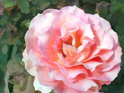 Full Blooming Salmon Pink Rose Poster