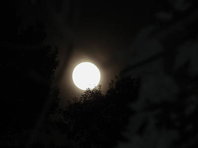 Poster featuring the photograph Full Moon Beauty by Ester  Rogers