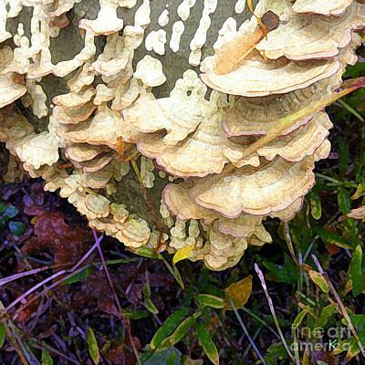 Funghi I Poster by David Klaboe