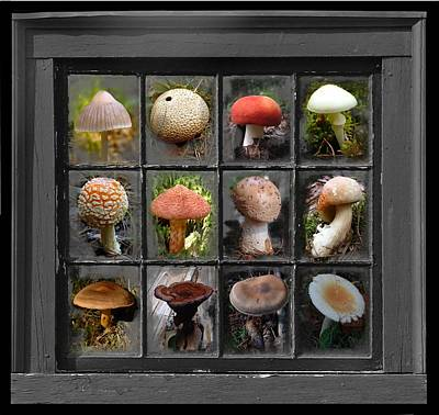 Fungus By Windowlight Poster