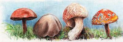 Fungus Panorama Poster