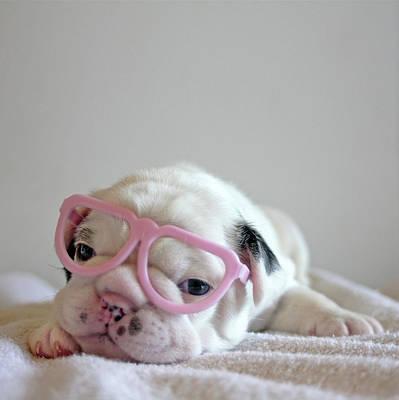 Funny French Bulldog Poster by Retales Botijero