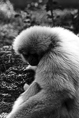 Fuzzy Monkey Poster