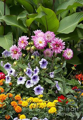 Garden Flowers In Bloom Poster