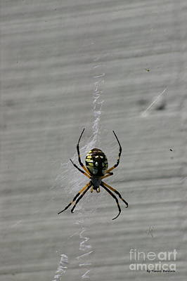 Poster featuring the photograph Garden Spider by Tannis  Baldwin