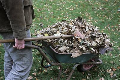 Gardener Pushing A Wheelbarrow Poster by Maxine Adcock