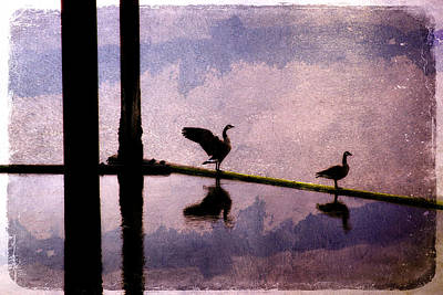 Geese At Dawn Poster by Carol Leigh