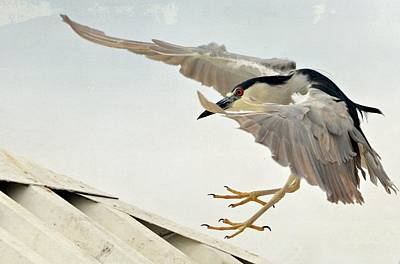 Gentle Landing Poster by Fraida Gutovich