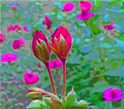 Geranium Buds And Zinnia Poster by Padre Art