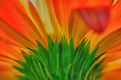 Gerbera Explosion Poster by Stelios Kleanthous