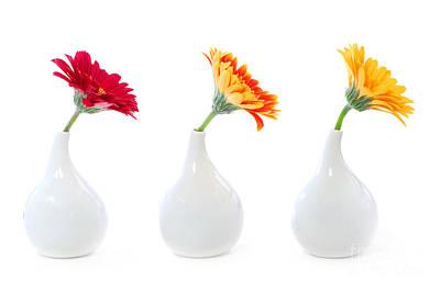 Gerbera Flowers In Vases Poster