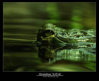 Gharial's Eye Poster by Leito R