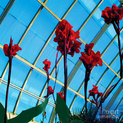 Giant Canna Lilly Poster