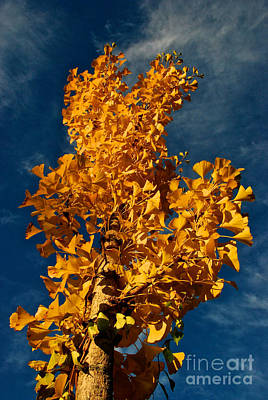 Gingko To The Sky Poster