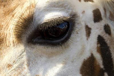 Poster featuring the photograph Giraffe Eye by Carrie Cranwill